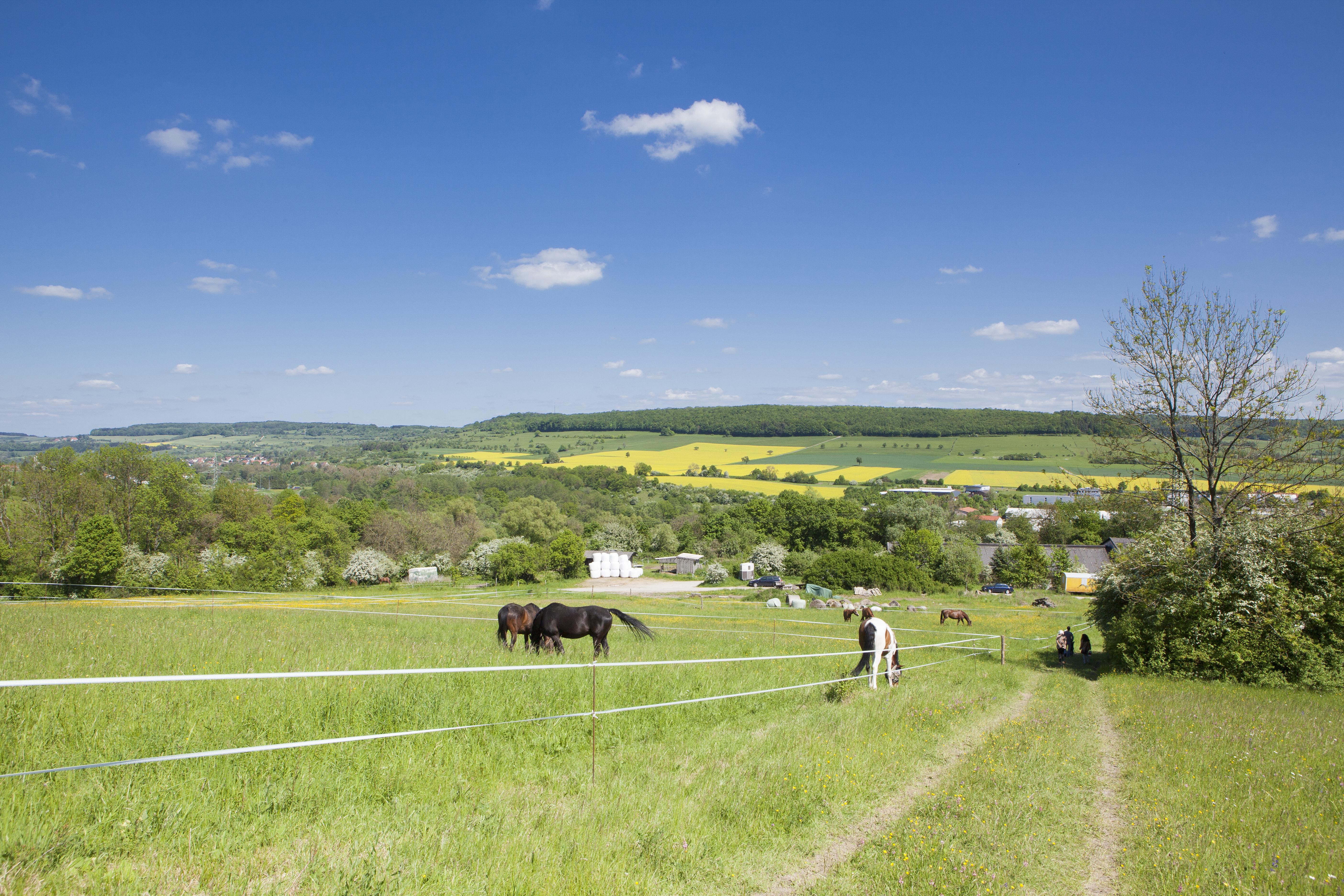 Pferde auf Bliesgauwiese