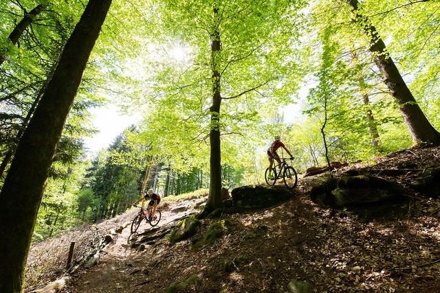 Mountainbiker im Bliesgau