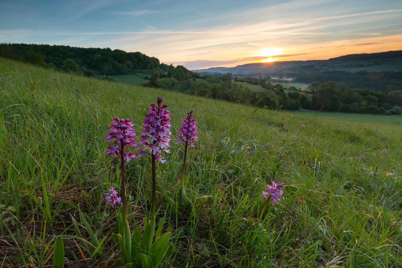 Orchideen in Gersheim