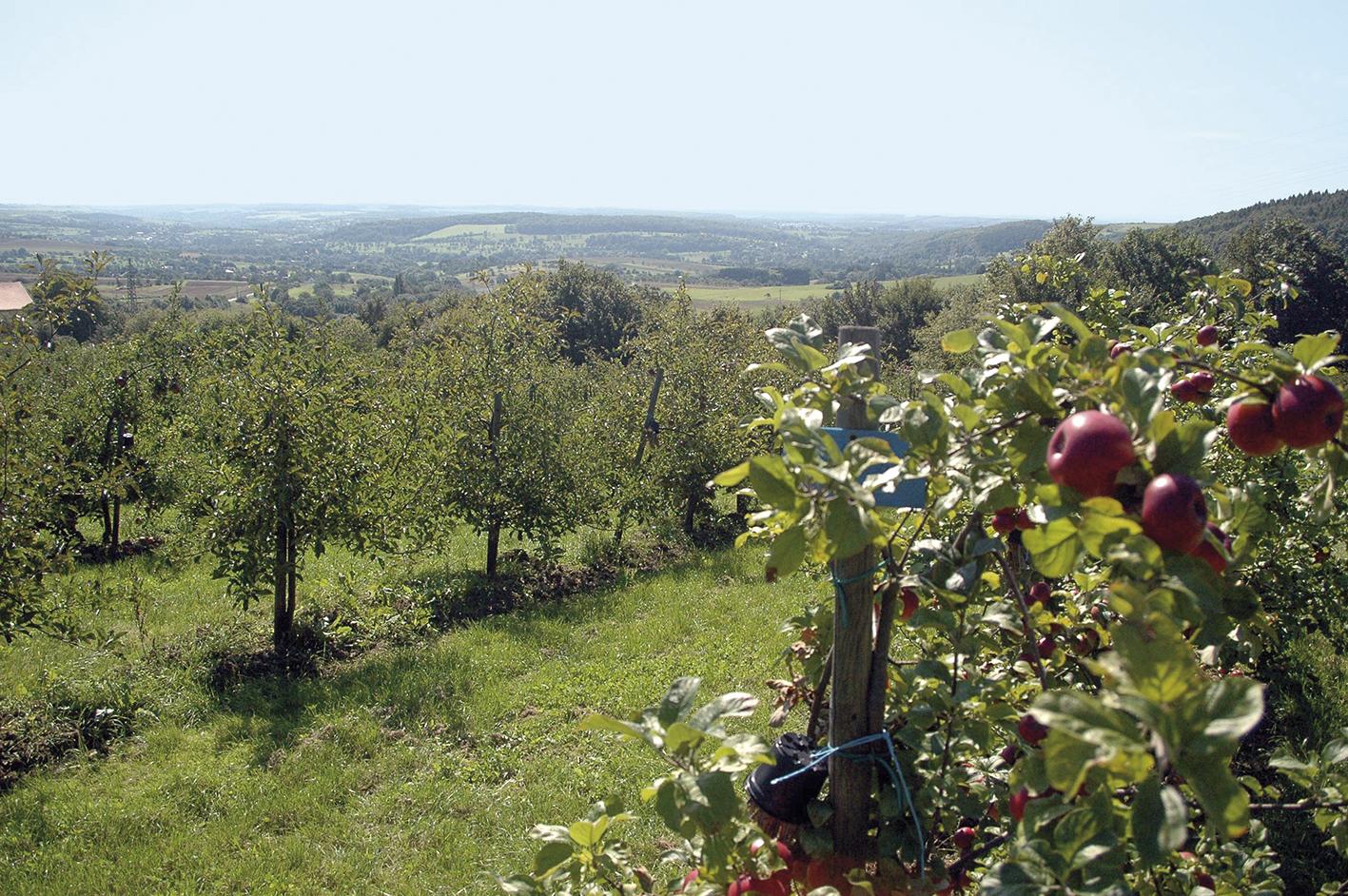 Aussicht vom Wintringer Hof, Äpfel