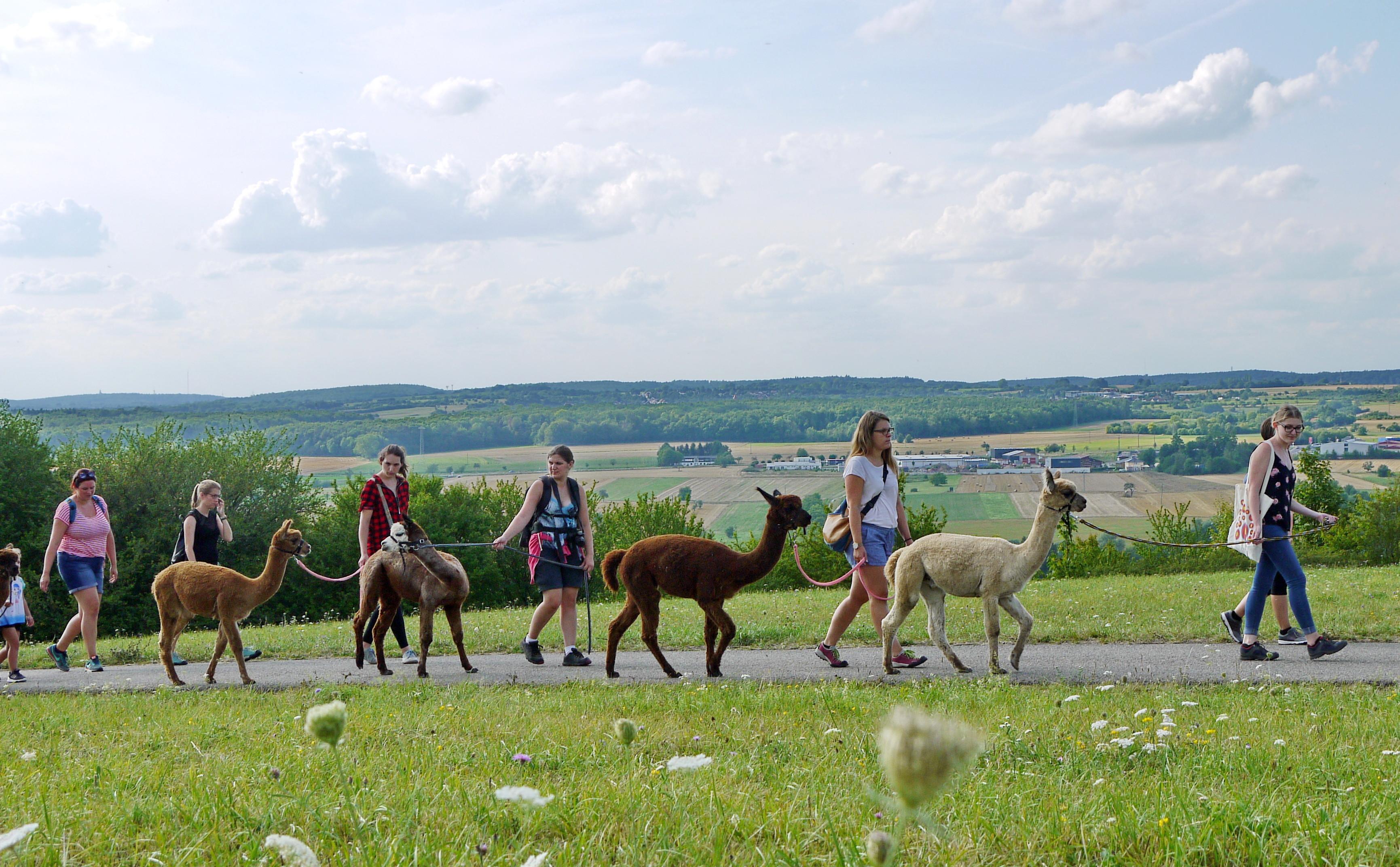 Alpakawanderung im Bliesgau, Helenenhof