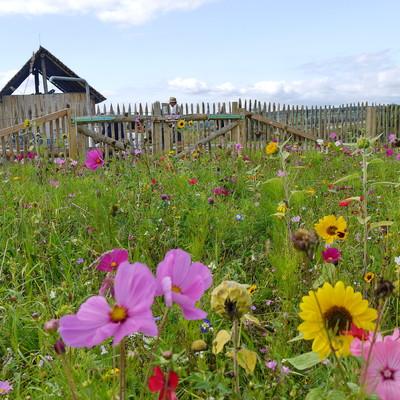 Keltenhäuschen in Altheim mit Wildblumenwiese