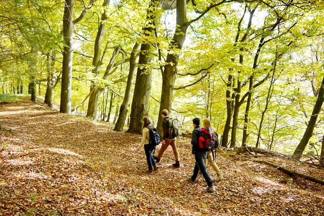 Wandern auf dem Hüttenwanderweg St. Ingbert