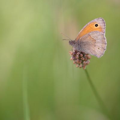 Kleiner Schmetterling im Bliesgau