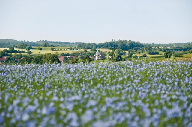 Leinenfeld im Bliesgau