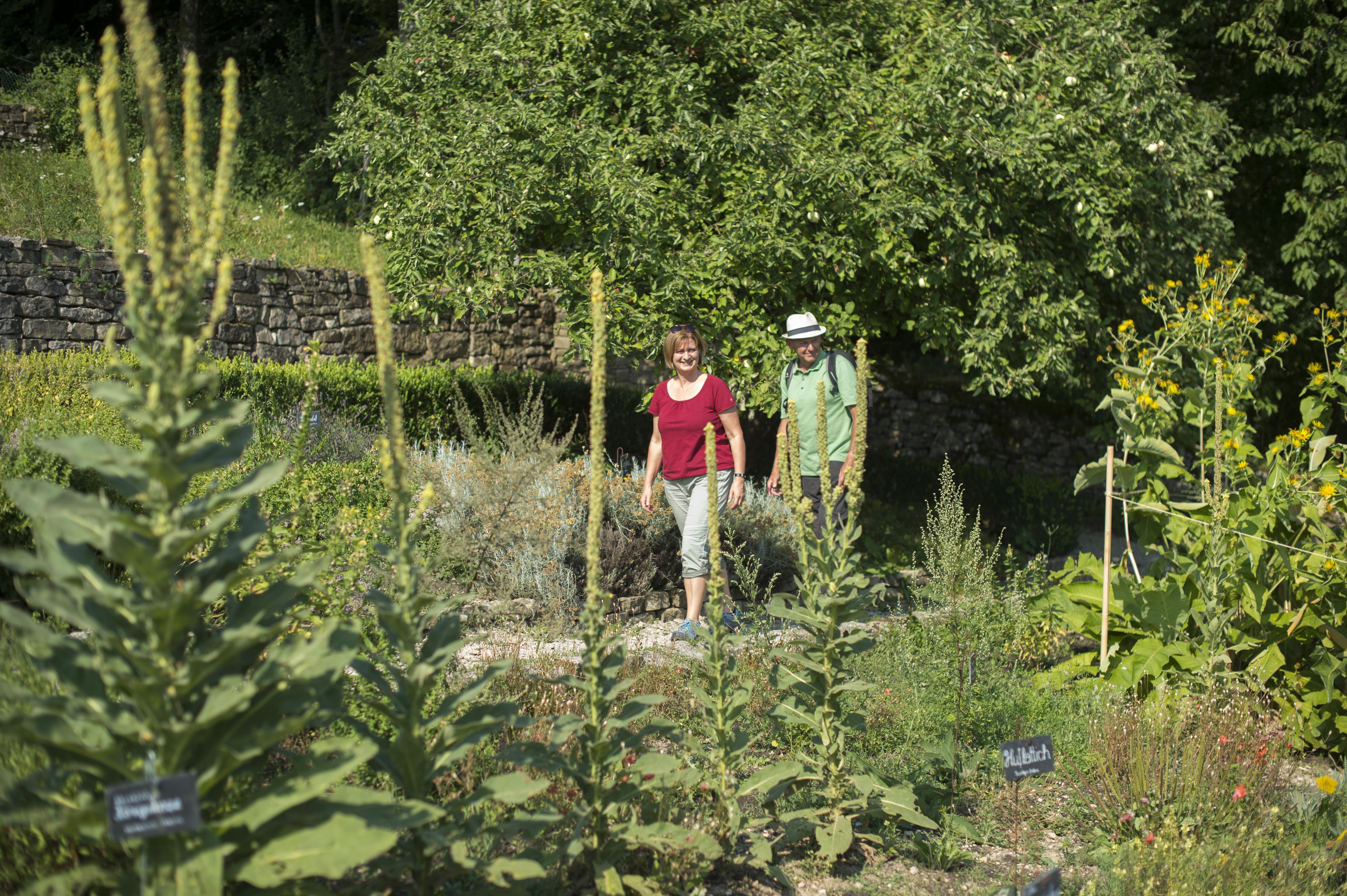 Kräutergarten mit Königskerzen