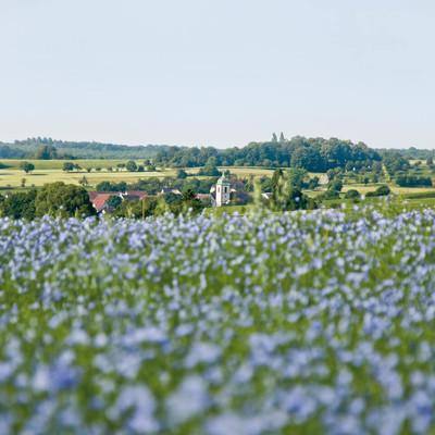 Leinenfeld