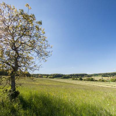 Die typische Biosphäre Bliesgau Landschaft