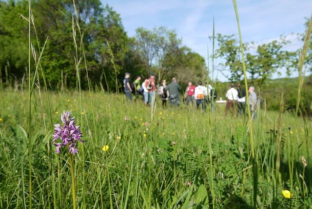 Führung Orchideengebiet