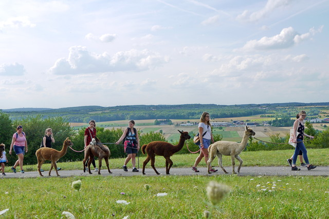 Alpakawanderung im Bliesgau
