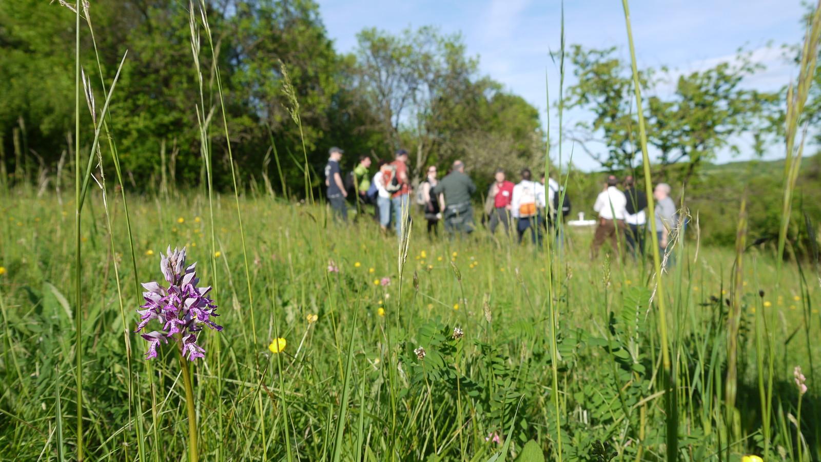 Führung durch das Orchideengebiet