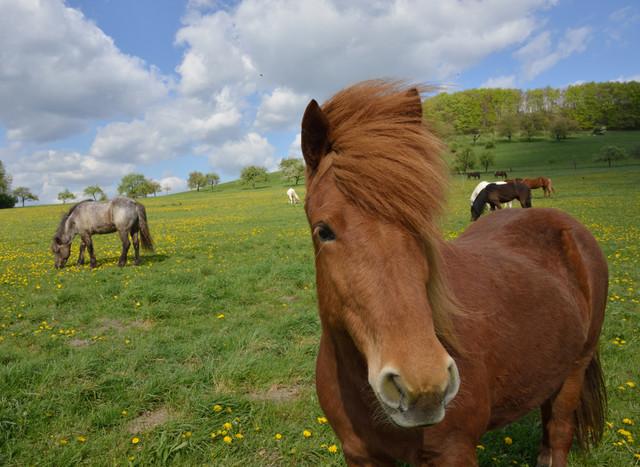 Pferd im Bliesgau